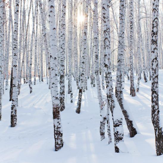 Dekorwand 3D Element Winterwald